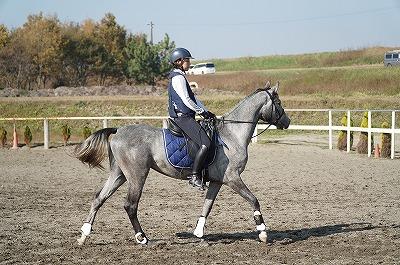 美しい馬と