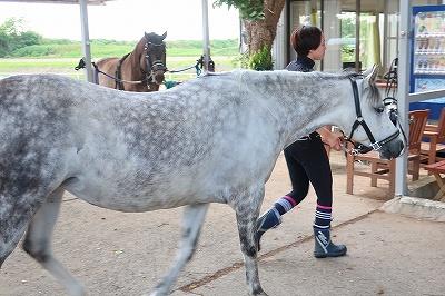 愛情管理で立派な馬体
