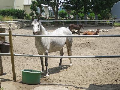 馬の信頼のオーラ