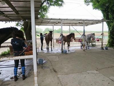 手の行き届いた馬達