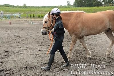 乗馬の普段練習