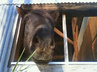 馬はナチュラル