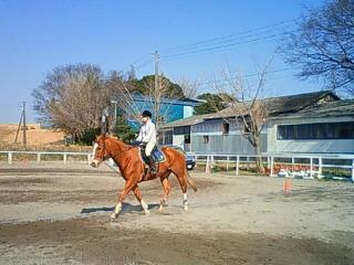 将棋と乗馬