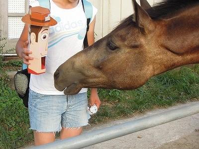 興味津々な馬