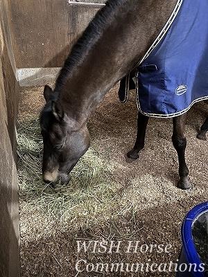 馬とラブラブ乗馬