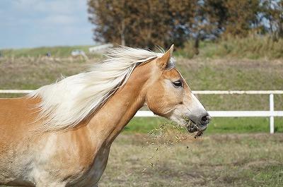 馬を健康に管理します