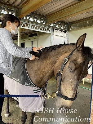馬の気持ち良い表情
