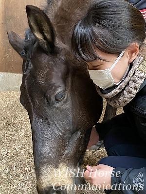 乗馬の愛情