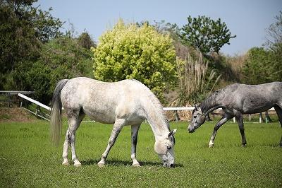 本当の馬の乗り方を知らない人が多すぎてびっくり!