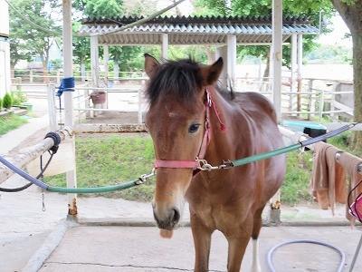 新馬調教 馬とコミュニケーションする