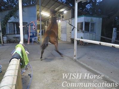 教え育てる乗馬