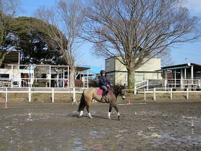今日のハピコミ体験乗馬