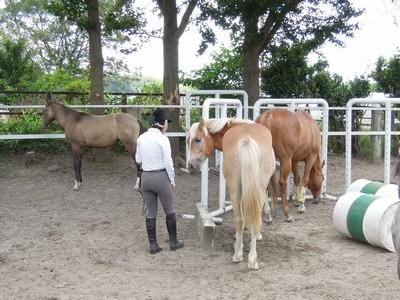 乗馬クラブメンバー入会一日目