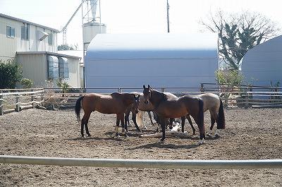 馬達が馬らしく暮らせますように