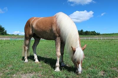 馬の気持ちを考えよう