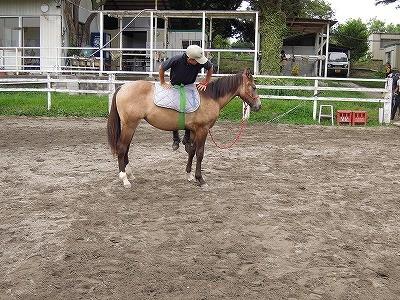 馬に受け入れてもらう