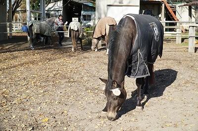 馬のひつじコスプレ写真