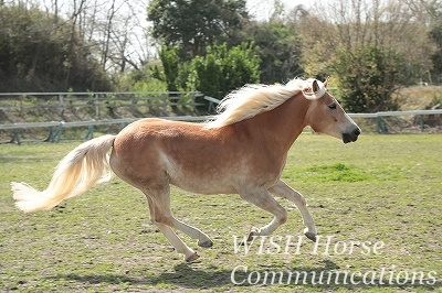 走るかっこいい馬