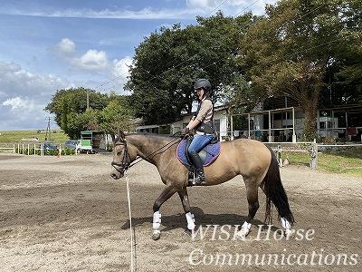 乗馬の上達方法