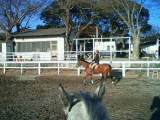馬に乗っているときの感覚