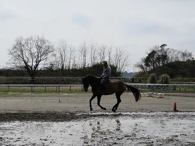 裸馬での騎乗