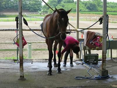 安心して馬を愛する