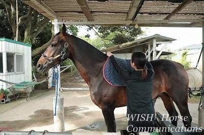 乗馬の馬装