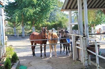 ウィッシュの馬達は人が大好き