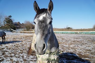 ウィッシュの生産馬