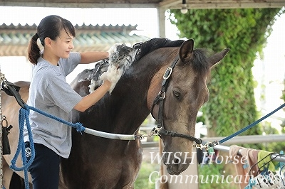 馬の気持ちいい表情