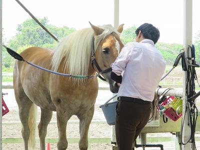 馬との愛情乗馬