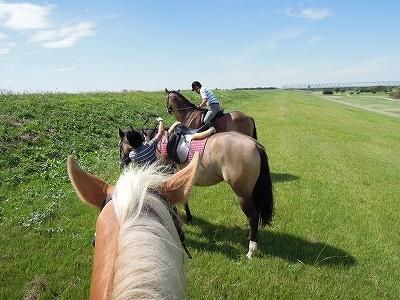 馬の写真撮影