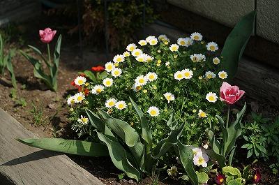 乗馬クラブの春の花