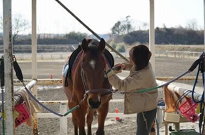 馬と優しい関係