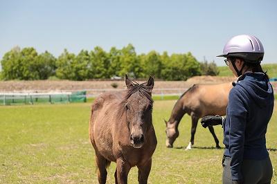 馬と仲良くなるために