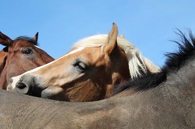 仲のいい馬達