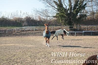 駆け寄ってくる馬