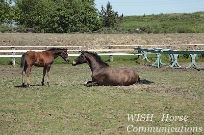 仲良し乗馬