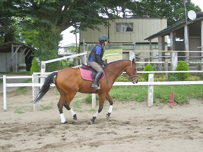 素晴らしい乗馬体験