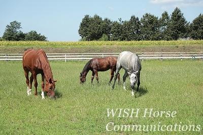 乗馬の姉妹