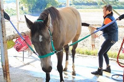 馬と素敵なコミュニケーション