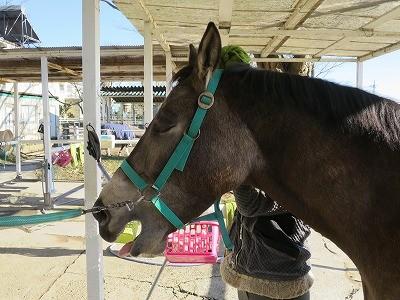 馬と人の良い関係