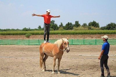 馬と仲良くなるには