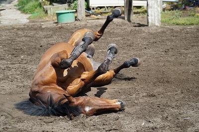 放牧で喜ぶ馬