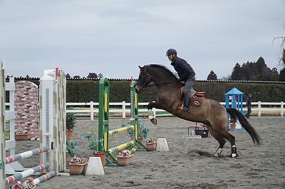馬が嫌がることやうんざりすることに集中させるのは虐待