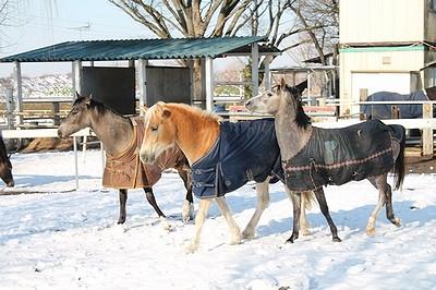 雪を楽しむ馬たち