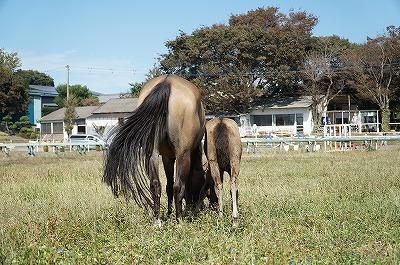 愛情がある乗馬