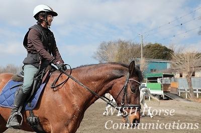 馬に教わることができる乗馬
