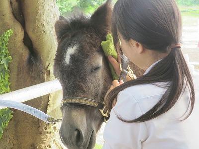 馬をうっとりさせよう