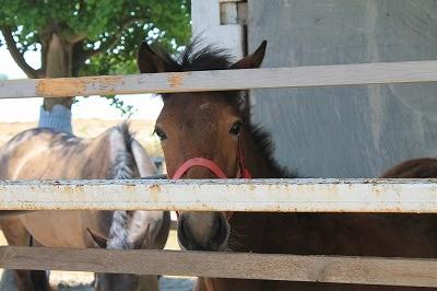新馬調教 馬に気軽に話しかけられるようになること!